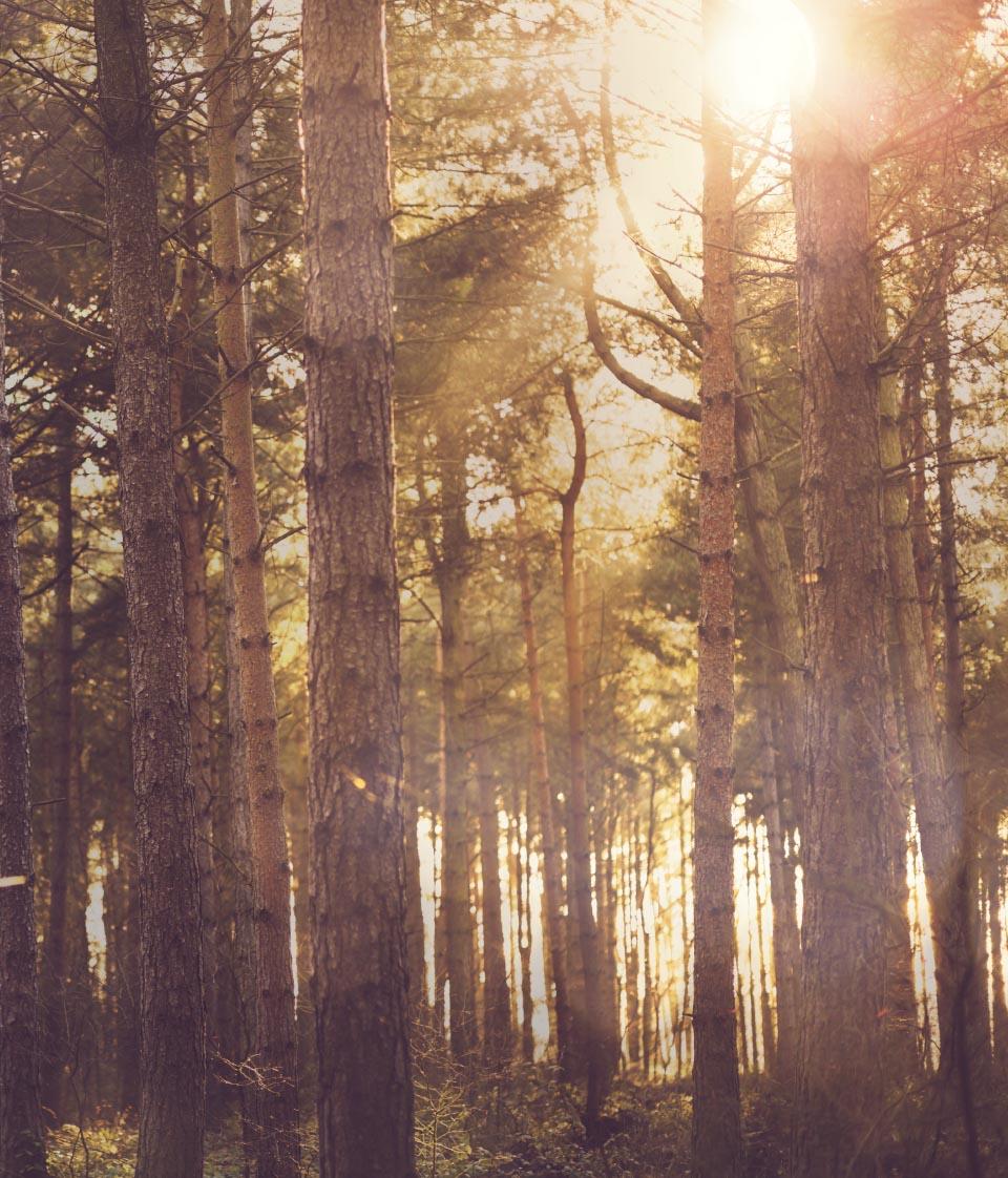 Champneys-Forest-Mere-Spa-Design-Natural